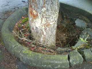Bad Place for a Tree Close-Up