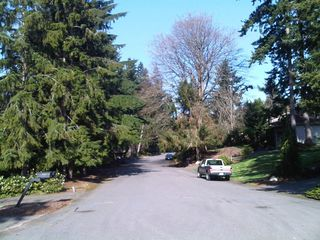 The view down this street bordering the park features plenty of conifers