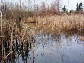 1-26-10_Milgard Wetland_Lite