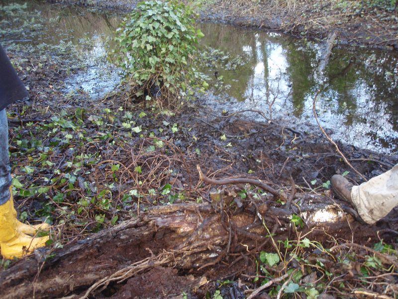 Creek bank sans ivy