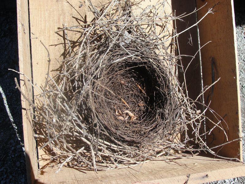 Nest in box