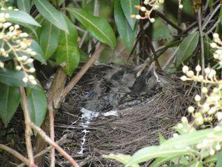 Babies in nest1