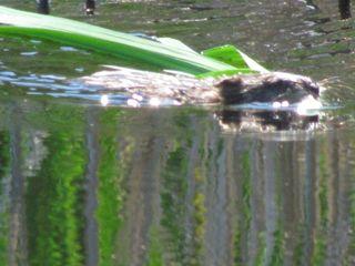 Otter 5813