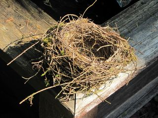 Nest at Adele's
