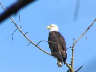 Eagle 2520