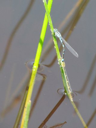 Dragonflies 5749