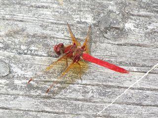 Dragonfly 5671