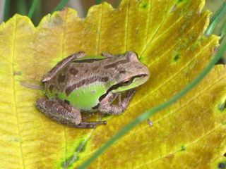 Frog0848