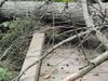 82008_west_hylebos_fallen_tree_up_c