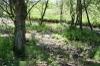 Downstream_wetland