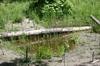 Wetland_plantings_vii